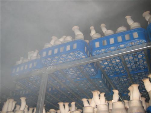 上海金嘉乐:打造食用菌加湿器领导品牌